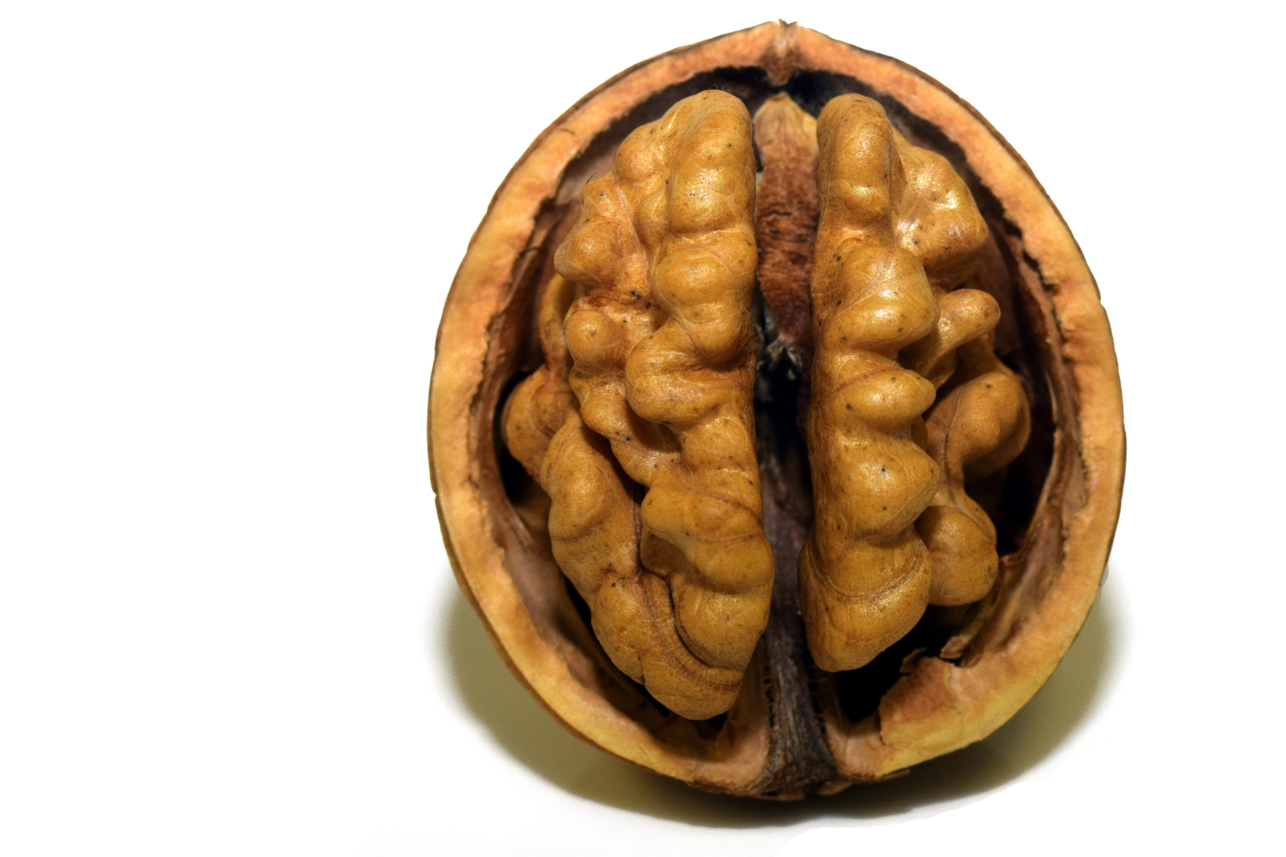 Walnut half looking like brain